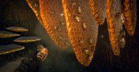 Varsav Game Studios ogłosiło datę premiery Bee Simulator
